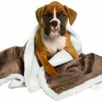 Animal Planet Sherpa Pet Blanket, Pewter