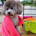 {Factory Direct Sale} Cozy Soft Practical Pet Dog Cat Kitten Coral Blanket Mat 60x40cm Random Color