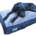 First-Quality 6″ Thick Orthopedic Dog Bed | Pure Premium Memory Foam | Ideal for Aging Dogs | Helps Ease Pain of Arthritis & Hip Dysplasia | Waterproof | 180 GSM Removable Washable Cover (36″ x 24″ Grey & Ocean Blue Trim)
