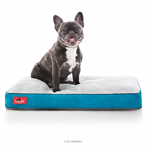 BRINDLE Soft Memory Foam Dog Bed with Removable Washable Cover – 17in x 11in – Teal